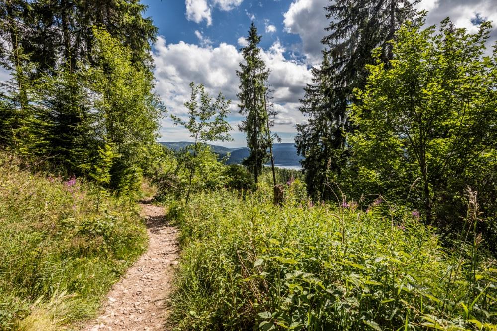 Wanderweg bei Schluchsee